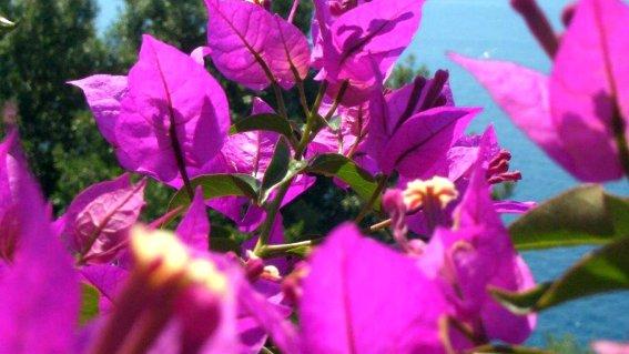 Blumen Psychotherapie