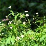 Blumenwiese Psychotherapie