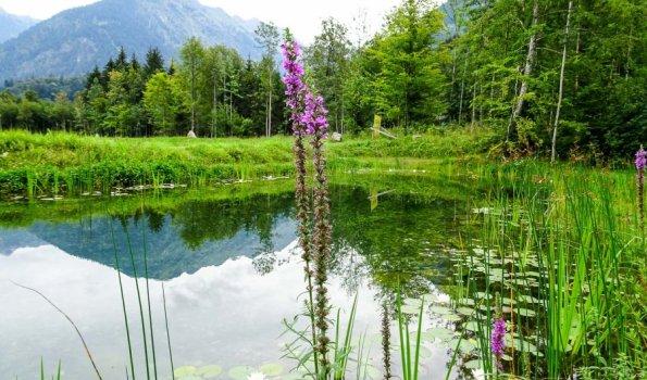 Amphibienlaichgewässer