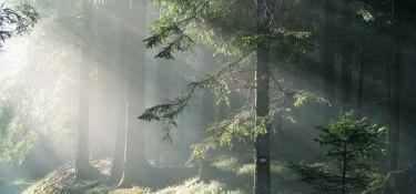 Morgenstimmung im Wald
