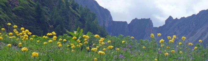 2. Tag - Trollblumenwiese beim Aufstieg zur Memminger Hütte