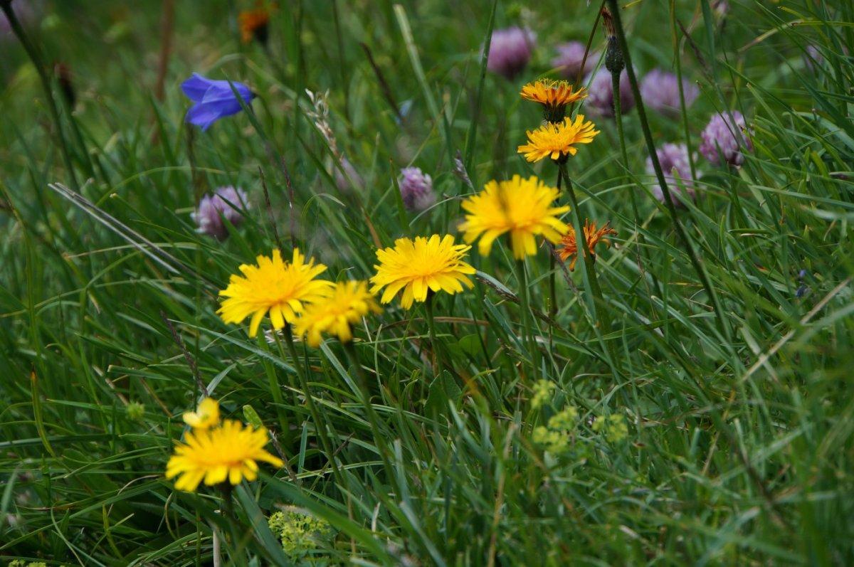4. Tag - Herrliche Blumenwiesen im Pitztal