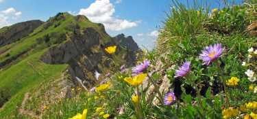2. Tag - Blühende Wiesen und Grashänge auf der Südseite und schroffe, steile Nagefluhflanken auf der Nordseite - charakterist