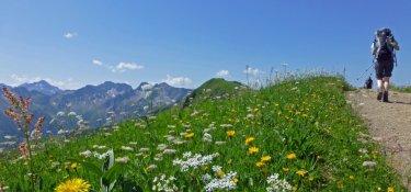 Hier zeigen sich die Allgäuer Bergwiesen in herrlicher Blütenpracht