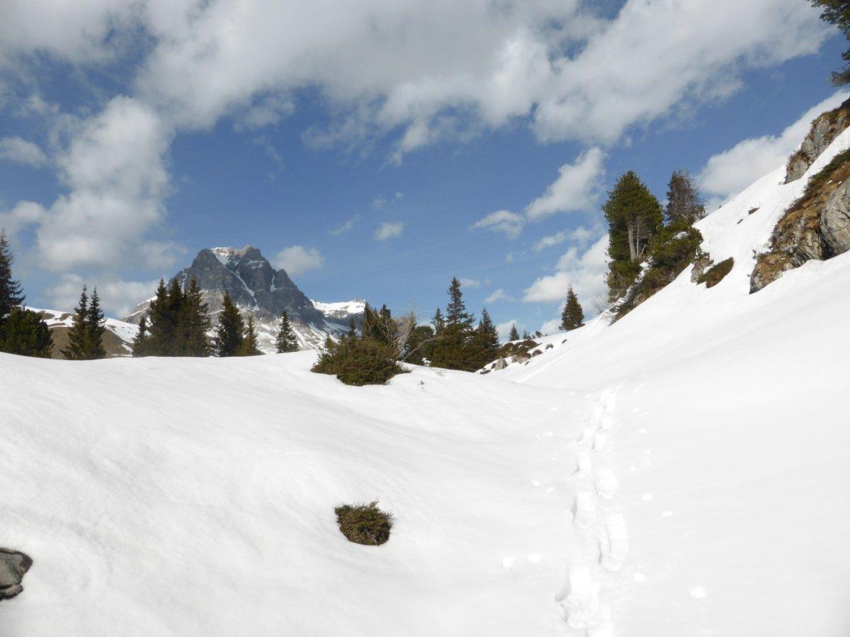 1. Tag - Blick zurück zum Hochalppass und den Großen Widderstein