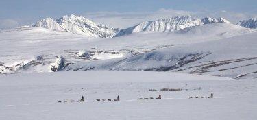 Dogmushing in den Weiten Alaskas