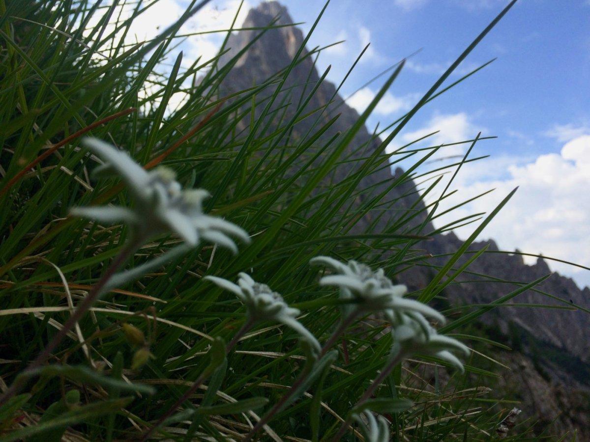 Dolomiten Höhenweg 2 Edelweiss
