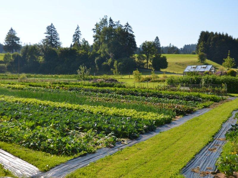 Obere Mühle Bio-Gemüse