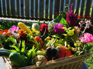 Gartenfrüchte (1)