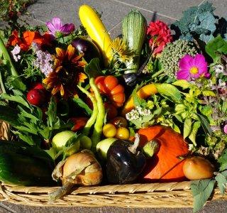 Gartenfrüchte (4)
