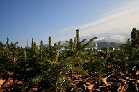 Baum_pflanzen_bei_Haubers