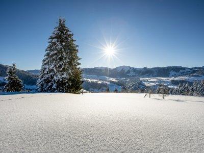 Oberstaufen-Natur Hochgrat Winter