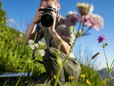 Blumenvielfalt im Naturpark Nagelfluhkette