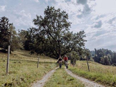 Naturbiken im Allgäu