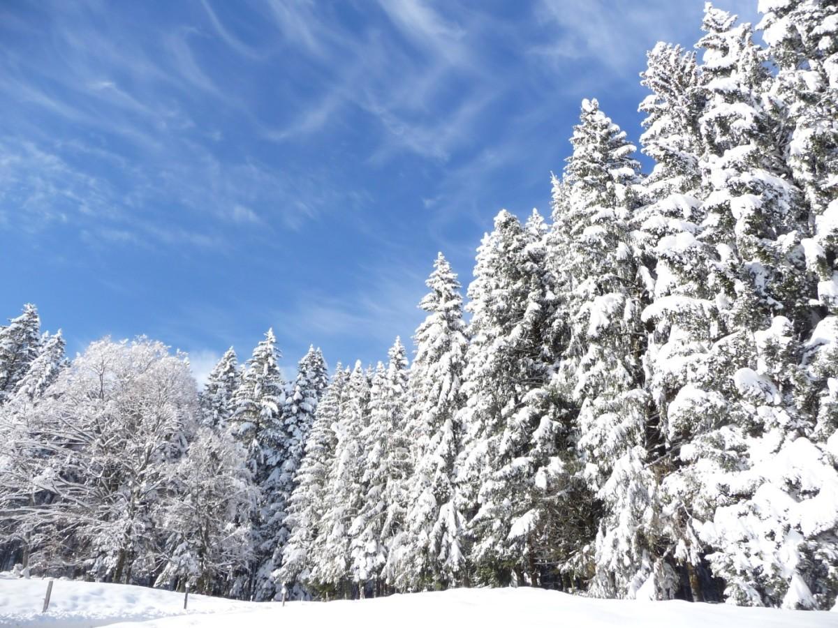 Winterwunderland auf dem Kapf
