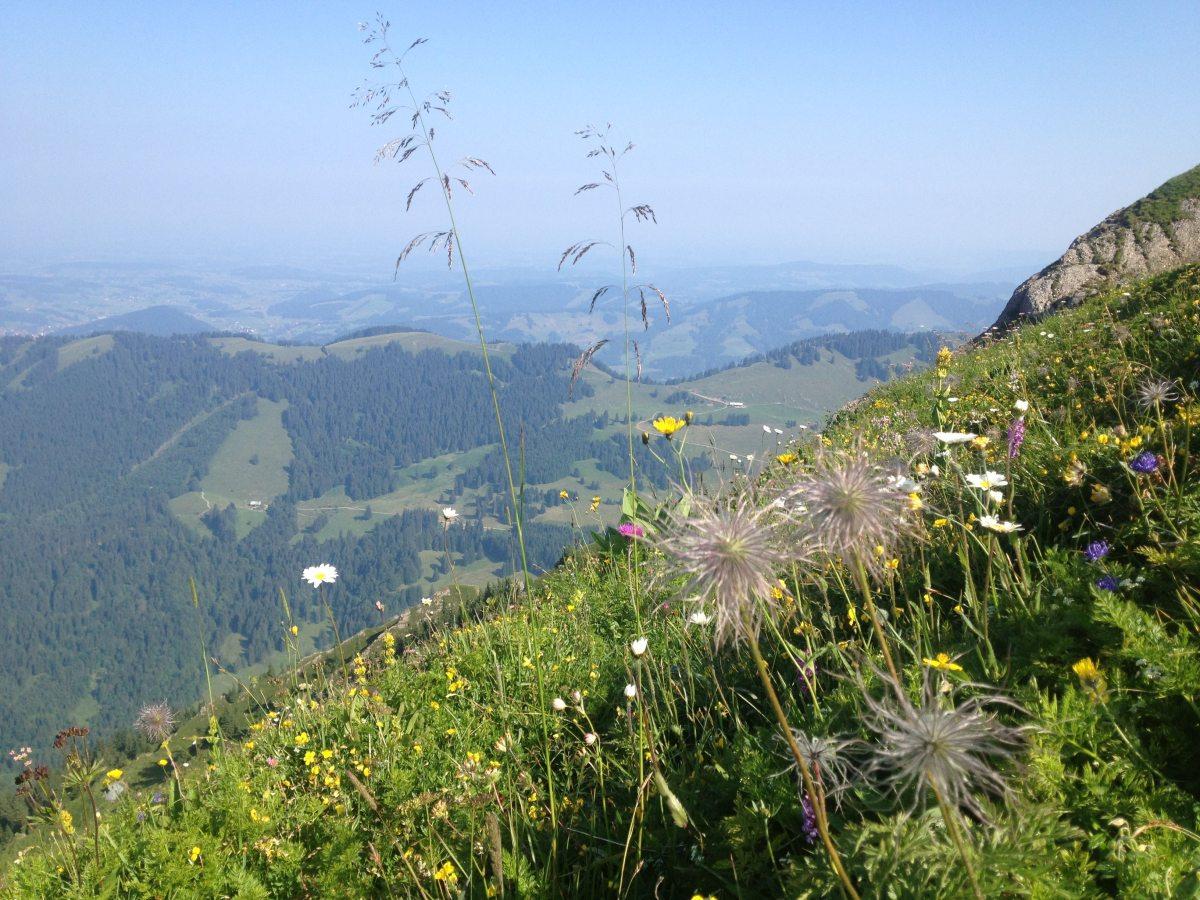 Blick von der Nagelfluhkette ins Tal