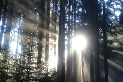 Lichterspiele Kapfwald