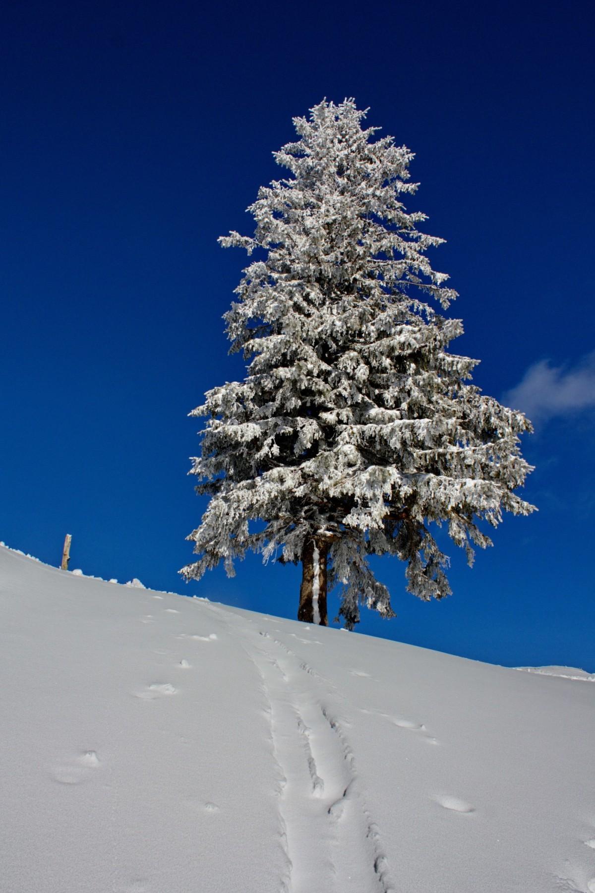 Verschneiter Baum auf dem Luftigen Grat
