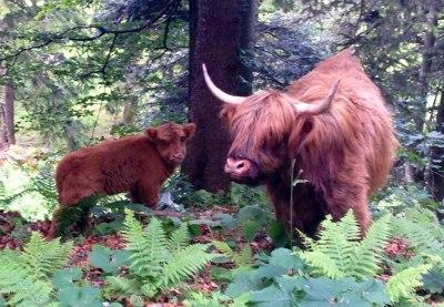 Tierische Begegnungen auf dem Weg zum Steinernen Tor