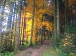 Der Kapf im Herbstkleid