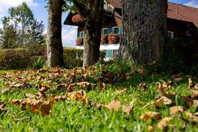 Herbstlaub am Wegesrand