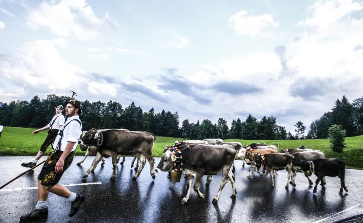 Die Herde macht sich auf den Weg ins Tal