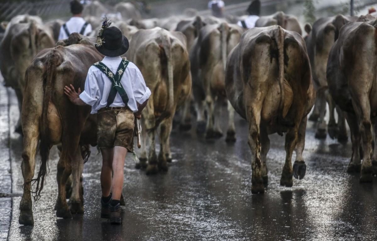 Hirtenjunge mit seiner Herde