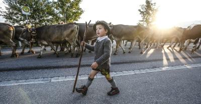 Kleiner Hirtenjunge am Viehscheid
