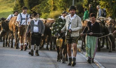 Alpe Oberbergmoos auf dem Weg zum Viehscheid