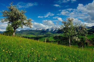 Oberstaufen im Frühling