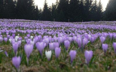 Die Berge erwachen - Frühling am Alpenrand