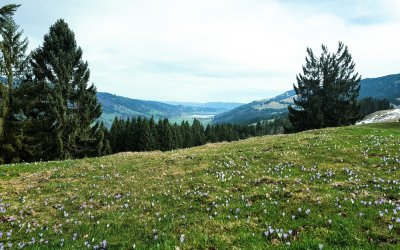 frühlingshafter Ausblick in Richtung Alpsee