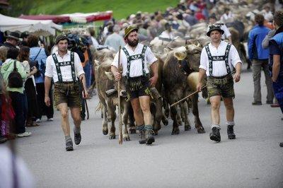 Hirten treiben die Herden ins Tal beim Viehscheid