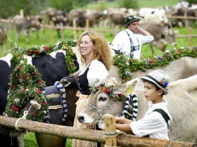 Viehscheid Oberstaufen mit Kranzrind