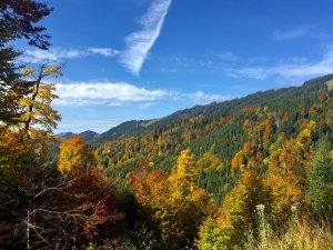 Herbstwälder in den Bergen