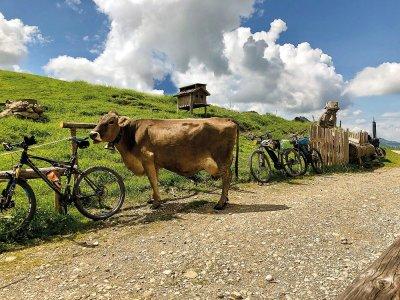 Vorbei an Kühen beim Radeln rund um Oberstaufen