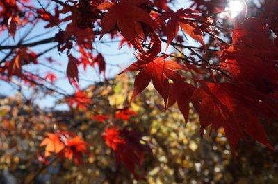 Herbst in Oberstaufen