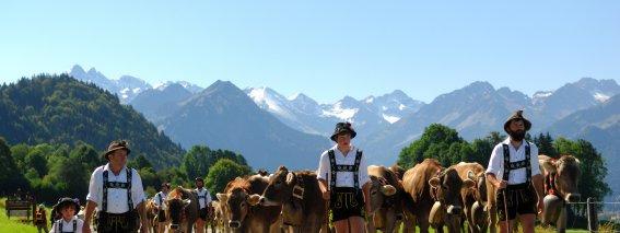 Viehscheid in Oberstdorf und  Schöllang