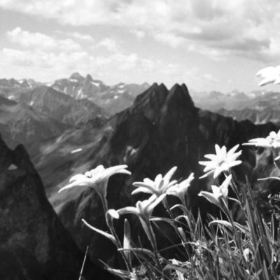 Edelweiss mit Hoefats Panorama 100069