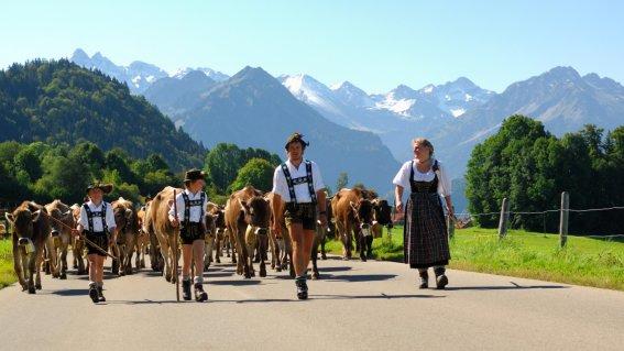 Viehscheid im September in Schöllang