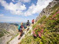 Wandern zwischen Alpenrosen