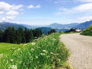 Wanderweg am Söllereck