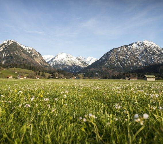 Frühlingswiesen