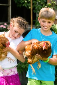 Mit den Hühnern im Garten