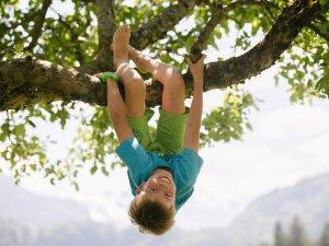 Junge hängt im Baum