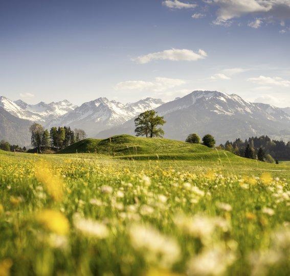 Blick auf das frühlingshafte Oberstdorf