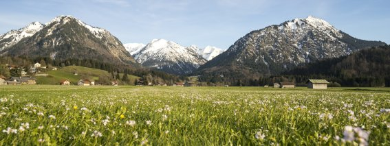 Blumenvielfalt im Ösch