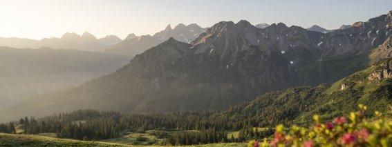 Fellhorn Alpenrosen