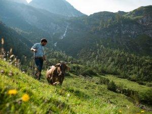 Zämed duss in der Alpwirtschaft