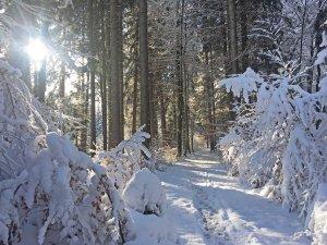 Winterzauber im tief verschneiten Wald.